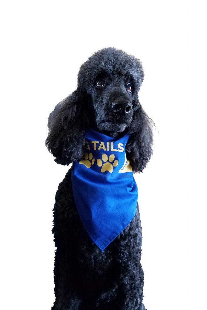 Rhett - Caring Tails Team Member